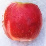 Recepten voor rood sap. Welke pure, gezonde ingrediënten zijn lekker voor in een zelfgemaakte sap met slowjuicer of sapcentrifuge? Denk aan bieten, appel, tomaat, druiven!
