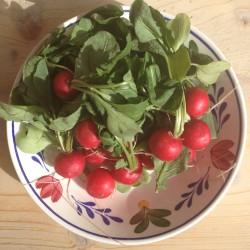 Geroosterde radijsjes met tijm. Heerlijk lente bijgerecht. Naast vis, of in een salade.
